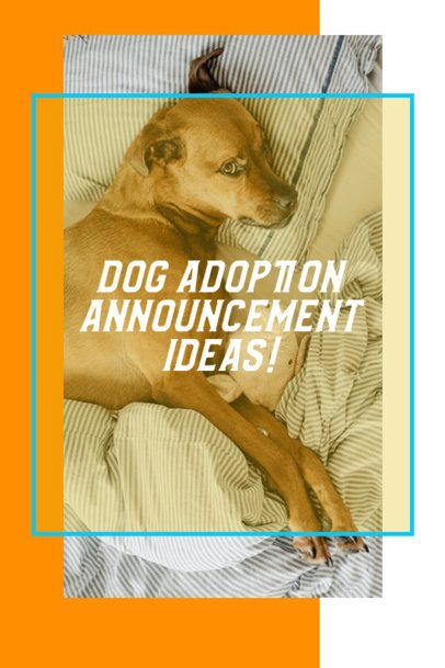 Pinterest Pin Creator for a Dog Adoption Announcement 2150f