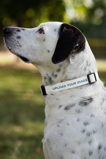 Dog Collar Mockup 33277