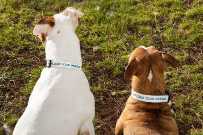 Dog Collar Mockup Featuring Two Dogs 33302