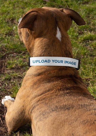 Dog Collar Mockup Featuring a Dog Lying Down at the Park 33301