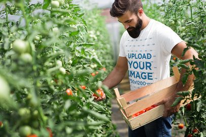 T-Shirt Mockup of a Bearded Man Picking Tomatoes 40661-r-el2