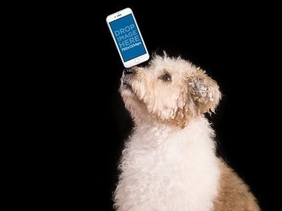 Mockup of an iPhone Featuring a Dog against a Black Background 12974
